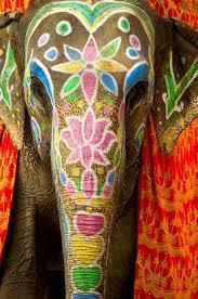 Resultado de imagen de elefantes de la india