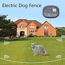 The 25 Best Underground Dog Fences Of 2020 Pup Life Today