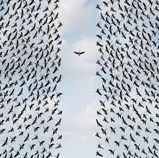Concepto De Individualismo Y Individualidad Símbolo O Pensador  Independiente Idea Y Nuevo Concepto De Liderazgo O Coraje Individual Como  Un Grupo De Aves Volando Con Un Individuo En La Dirección Opuesta Como