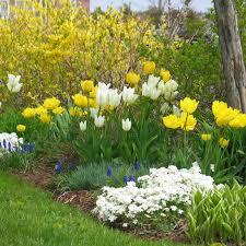 how to create a bulb garden gardening