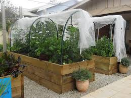 vegetable garden hoop houses