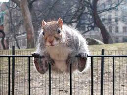 Let Me Do My Job And We Ll Get Your Nuts Back Animal Comedy Animal Comedy Funny Animals Animal Gifs
