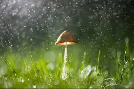 rainy nature wallpapers top free