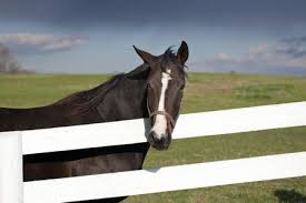What Is The Best Kind Of Fence For A Horse Pasture