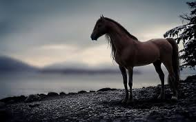 horse wallpapers wallpaper cave 1352