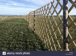 Windbreak Fence On A Field Stock Photo Alamy