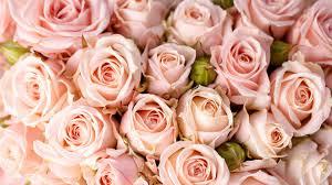 Wallpaper Roses 5k 4k Wallpaper 8k Flowers Pink Nature 5346