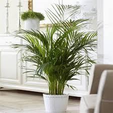 10 nombres de plantas de interior
