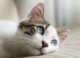 watery eyes in cats petmd