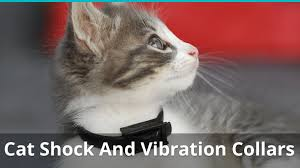 Electric Shock Collars For Cats And Kittens Are They Safe Best Ones