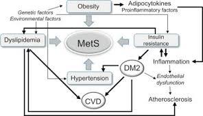 Image result for menopause mechanism