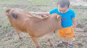 Em Bé và Con Bò - Hình Ảnh Đáng Yêu - Nhạc Thiếu Nhi Vui Nhộn ...