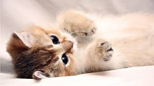 cute kitten backgrounds for puter on