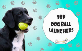 9 best dog ball launchers in 2020