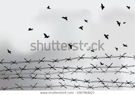 Barbed Wire Fencing Fence Made Wire Stock Vector Royalty Free 1067964821