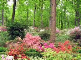 shade loving flowering plants for a