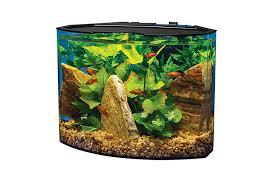 betta fish tanks choosing guide