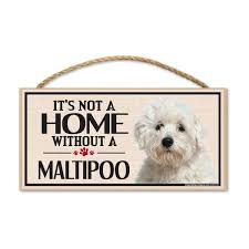 Maltipoo Dog Magnets Stickers Signs Window Decals Huge Selection Crazy Novelty Guy
