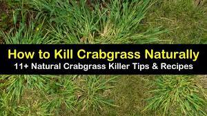 11 natural ways to kill crabgrass