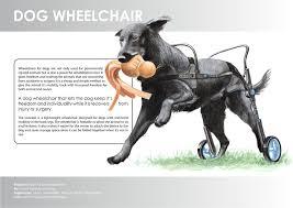 dog wheelchair by anna karin bergkvist