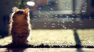 cute fluffy kitten hd wallpaper