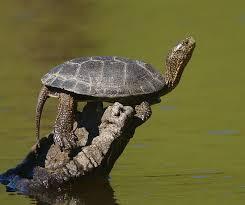 How To Build A Turtle Pond Aquarium Tidings
