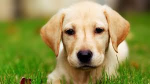 صور كلاب جميلة جدا صور حزينة Sad Images