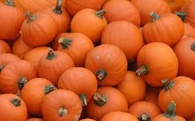 best 34 pumpkin desktop backgrounds on