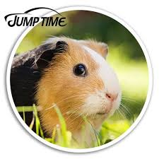 Jump Time Cute Guinea Pig Vinyl Stickers Pet Fun Sticker Laptop Luggage Car Assessoires Window Decals Car Wrap Diy Car Stickers Aliexpress