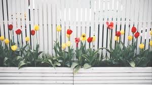 Top 32 White Picket Fence Ideas For 2020 A Nest With A Yard