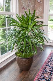 Low Maintenance Outdoor Plants That Are Good For Beginners