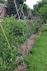 Protecting Berries From Birds Blueberries Raspberries Strawberries Gardener S Supply