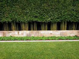 Privacy Plants A Living Fence For Your Outdoor Area