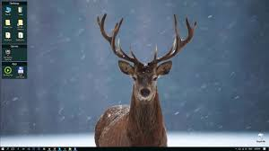 winter deer video live hd wallpaper