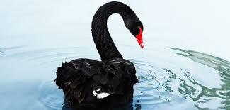 Unicorns and Black Swans - Venionaire Capital