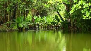 tropical forest in indian ocean stock