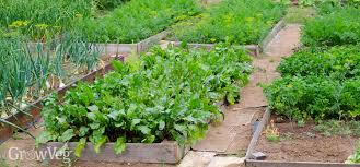 raised beds in your garden