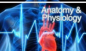Human Anatomy,Physiology Wiki for Android - APK Download