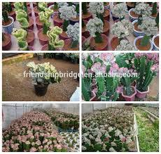 mini small big size multi color outdoor indoor cactus bonsai view
