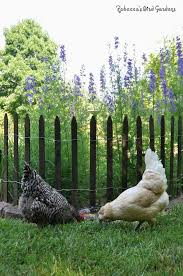 Gardening With Chickens And Picket Fences Community Chickens Chicken Garden Chicken Fence Chickens Backyard