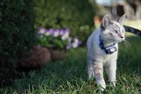 Invisible Fences For Cats Chester County Delaware County Cat Fence