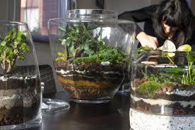best plants to grow in your terrarium