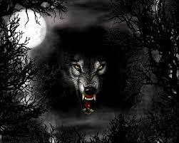 black wolf wallpapers top free black