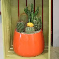 A Shopper S Guide To Buying Cacti Costa Farms