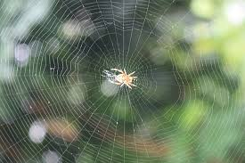 File:A classic circular form spider's web.jpg - Wikimedia Commons