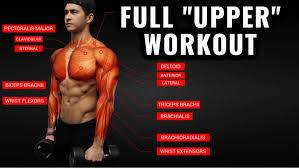 upper body workout routine and exercises
