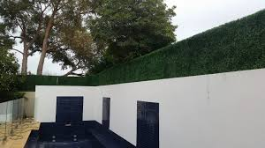 Extending The Height Of A Fence With Boxwood Hedge Panels Designer Plants
