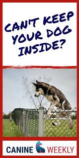 Dog Wireless Fences Dog Fence Dog Care Wireless Dog Fence
