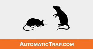 5 Ways To Rodent Control Your Garden Automatic Trap Company Automatic Trap Company