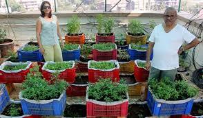 convert terrace into garden grow